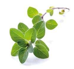 oregano-the-versatile-herb-lebiodka_pospolita_calivita